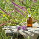 7 Remarkable Clary Sage Essential Oil Benefits